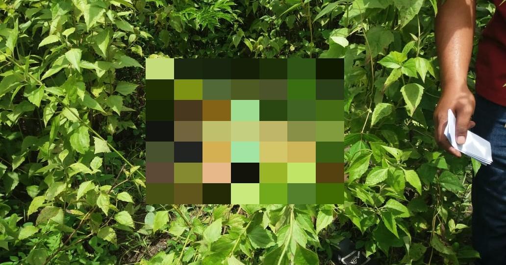 Penemuan Mayat Gadis 18 Tahun di Kupang, Banyak Luka Tusuk